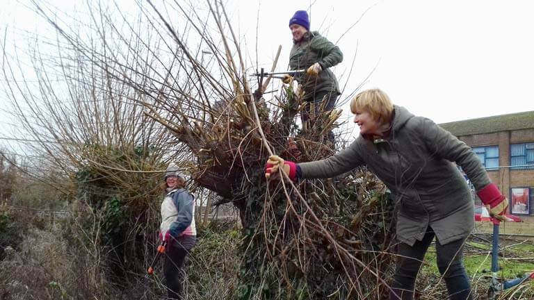 Volunteers team up to handle vegetation